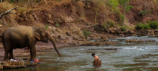 Des cascades, des éléphants, un café exceptionnel et une nuit dans un hôtel de passes : récit d'un <em>road trip</em> sur le plateau des Bolavens